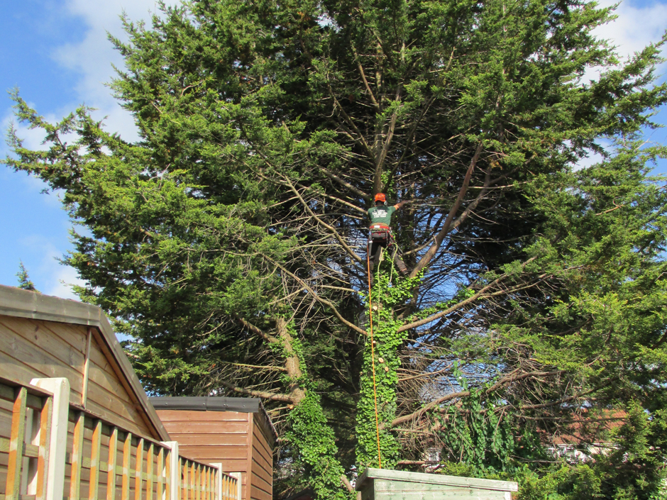 Image result for L Adams Tree Services
